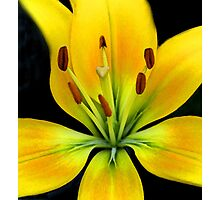 Lily in Watercolor Photographic Print