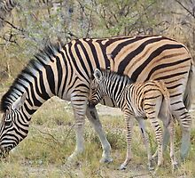 Zebra - African Wildlife - Paired up for Life by LivingWild