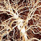 Zeus' Tree by XIII