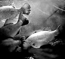 Fish and Bubbles by Scott G Trenorden