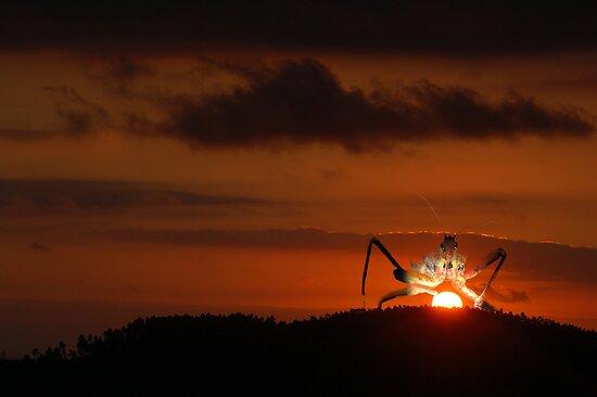 Sunrise. by sparrowdk