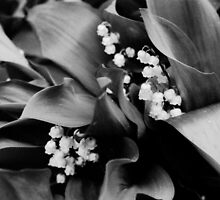 Lilly Of The Valley by Celinda