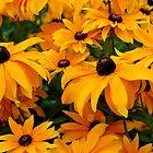 Flower of Love for her. by DavidROMAN