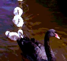 Black Swan & Cygnets, Dawlish, Devon by Peter Sandilands