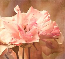 Scents of Summer - Textured Roses by SusieBImages