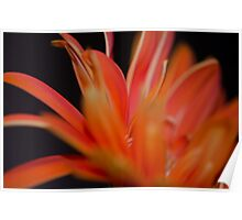 Flower Flames  Poster