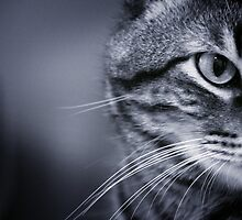 Portrait of cat in black and white by GemaIbarra