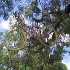 Bike in a tree. by Aaron Sanderson