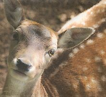 Wishful Thinking - Texture Fallow Deer by SusieBImages