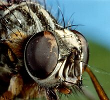 Compound Eye by Pete Costick