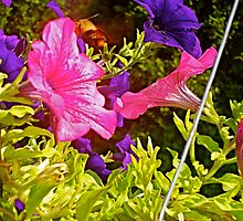 Summer Petunias 2 by Tara Filliater
