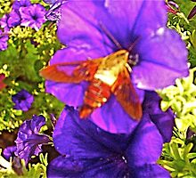 Summer Petunias & Humming Bird Moth 3 by Tara Filliater