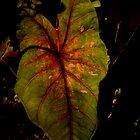 Nighttime Foliage by Glennis  Siverson