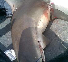 Bronze Whaler by specialgreg