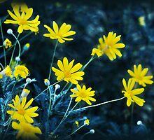 Sunshine by Julie Thomas