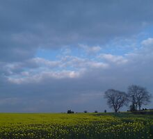 rape fields by pablitoblusher