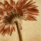 Gerbera * Wall Art by AnaCBStudio