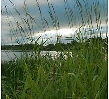 Through the Tall Grass by Suzanne Forbes-Murray