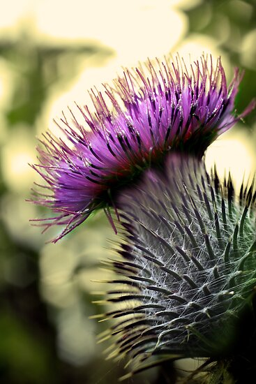 Thistle Do by Marloag