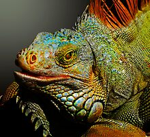 MACHO IGUANA by Michael Sheridan