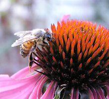 Buzz Buzz by Melzo318