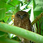Owl in Banana Tree by suzyque