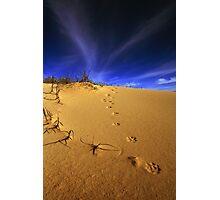 Fox tracks. Photographic Print