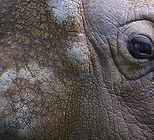 Rhino abstract....... by jdmphotography