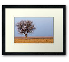 Single tree in plow land Framed Print