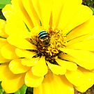 Busy Bee by smile4me