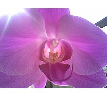 Pearly Orchid Photographic Print