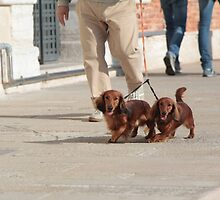 Dachshunds Twins by escaperabbits