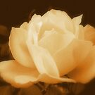 Antique Rose by Kimberlolly