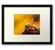 More Honey For Your Pollen Framed Print