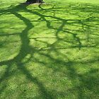 lawn shadows by andrewcarr