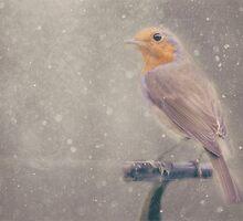 Mr Robin's Winter Wonderland - Textured by SusieBImages
