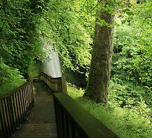 Glencar waterfall by John Quinn