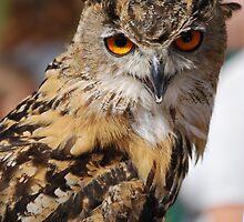 owl by ampwizbit