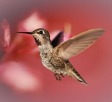Humming Bird Art by BluAlien