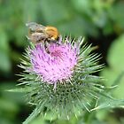 Busy, Buzzy, Bumble Bee by Gillen