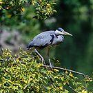 Heron by inkedsandra
