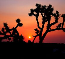 Joshua Tree at dusk by flyfish70