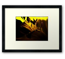 Lemon Lilly Touched by Light Framed Print