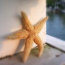 Starfish by Susan Zohn