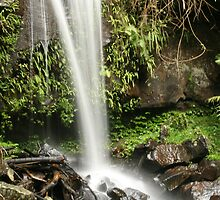 Waterfall Mount Tamborine by Helen Phillips