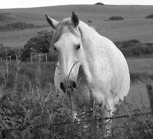 Horse in black and white  by JuliaWright