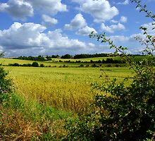 Wheat Field Landscape by David Gutteridge