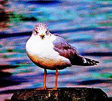 Boston Seagull by Ed Immar