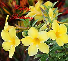 Allamanda by June Holbrook