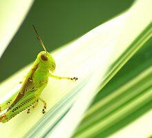 Pinstripe Hopper by velveteagle
